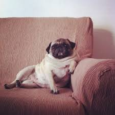 pugoncouch